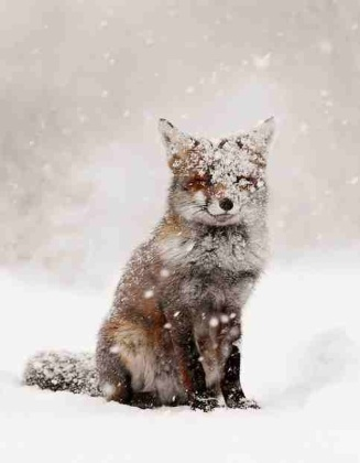 6f243852bbc589809a30a0ab3050737e--let-it-snow-the-snow